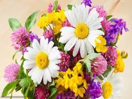 zakaz-cvetov-s-dostavkoi.jpg (11.65 Kb)